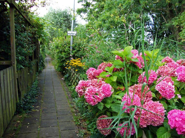 Het schattige wandelpaadje vol gekleurde bloemen loopt een paar honderd meter door. Beeld Karen Elliot