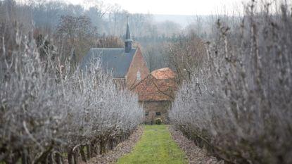 Haspengouwse fruittelers gezocht