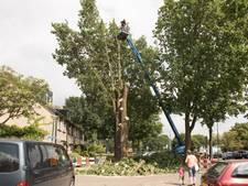 Twintig meter hoge eiken omgezaagd om waterleiding te redden in Baarn