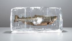 """""""Vries verse vis uit supermarkt nooit in"""": professor voedselveiligheid leert je voeding optimaal te bewaren"""