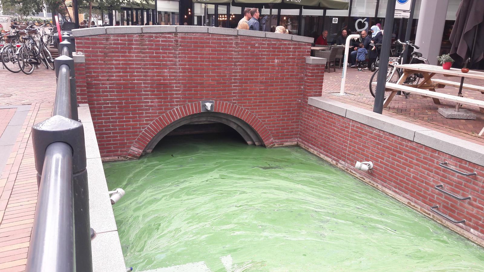 De Brouwersgracht in Veenendaal slaat groen uit.