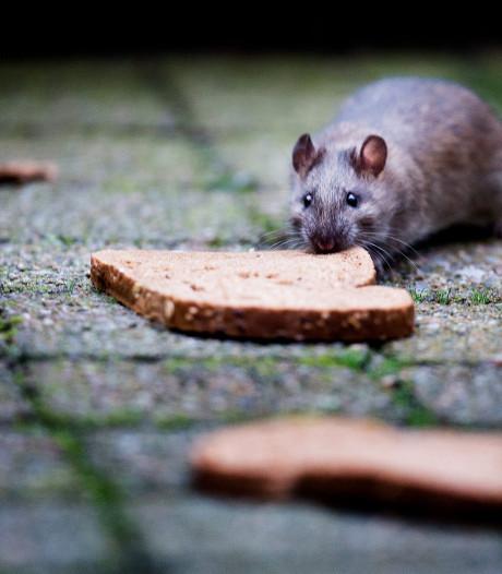 Rattenvangende afvalbak blijft ondanks bezwaar PvdD