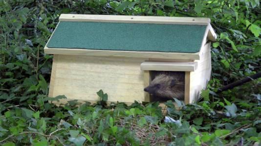 Een egelwoonhuis biedt bescherming voor de stekelbeestjes in de natte herfst en winter.
