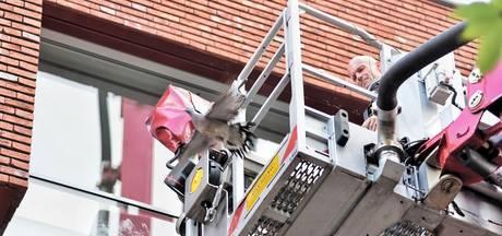 Brandweer bevrijdt duif bij balkon van Tilburgse woning