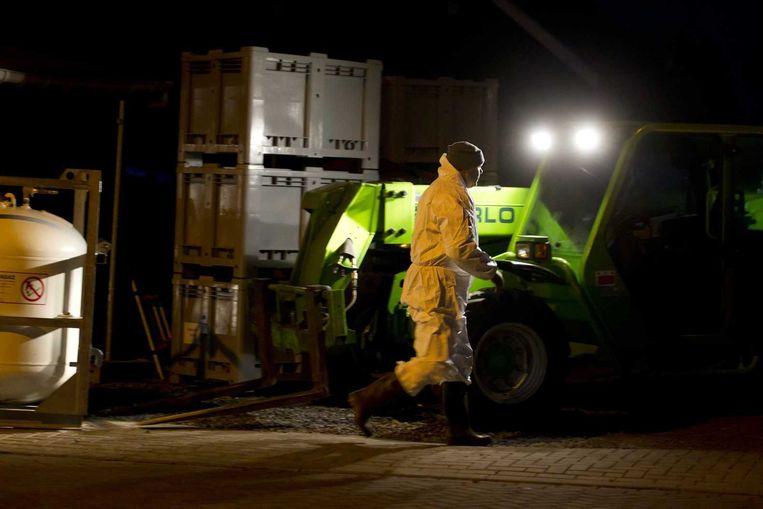 Een ruimer is aan het werk bij een pluimveebedrijf in Ter Aar. Beeld anp