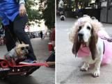 Met je hond verkleed naar Doggy Con in Atlanta