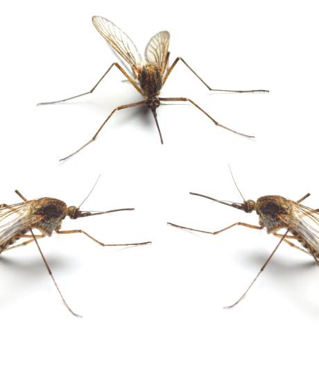'Muggenplaag in Biesbosch komt door het weer'