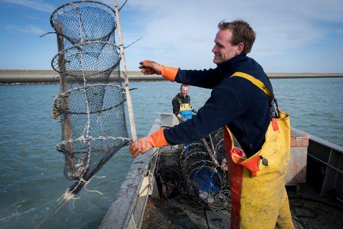 Jacco Kloet zet bij De Schelphoek een fuik uit, terwijl kreeftenvisser Gerrie van den Hoek op de achtergrond toekijkt.