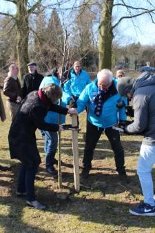 DorpsGoed zet notenboom aan Dommeloever als politiek stuntje