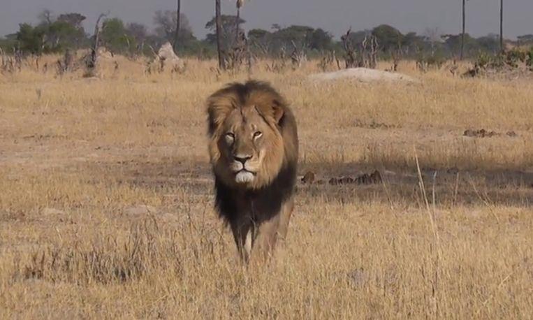 Leeuw Cecil.