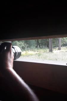 Jagers starten met afschieten 4000 wilde zwijnen op de Veluwe