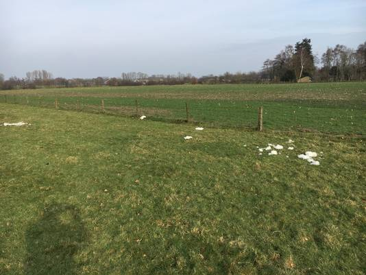 Het 'slagveld vol wol' in de wei in Groesbeek.