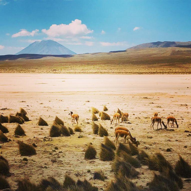 Wim De Vilder nam heel wat foto's in Peru