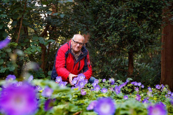 Kees Naalden bij de Franse geraniums die nu volop in bloei staan in de Oude Kwekerij in het Beatrixpark in Etten-Leur