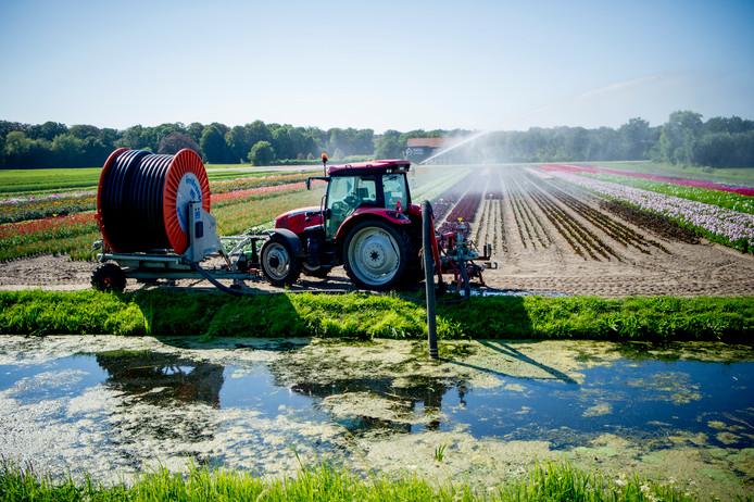Boeren in het gebied van Waterschap Drents Overijsselse Delta mogen bijna overal weer beregenen met water uit sloten en kanalen.