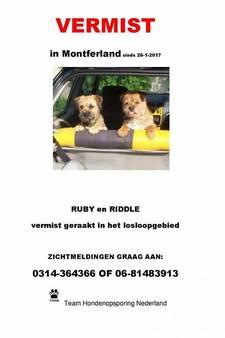 Hondjes Ruby en Riddle al dagen vermist: 'Het is heel erg'