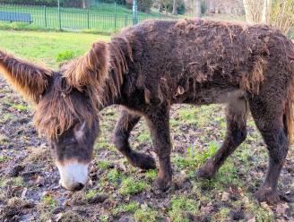 Schaarbeek breidt dierensite Josaphatpark uit: ezel Napoleon bijt spits af