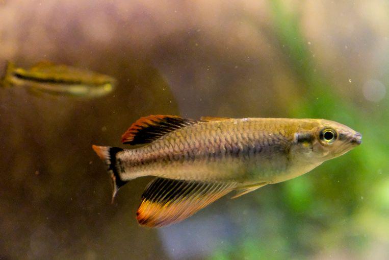 Op de beurs in Karteria vind je alle soorten vissen, planten en materialen voor je aquarium.