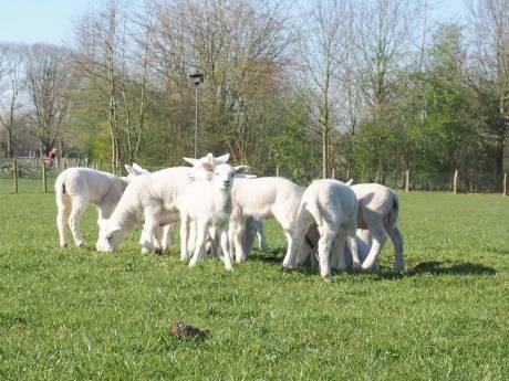 Deze dieren zijn net geboren op onze kinderboerderijen