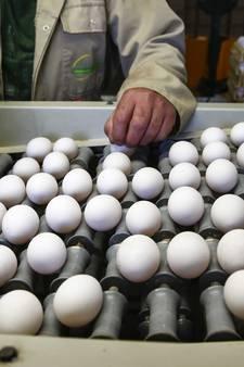 Ook Twentse eierboeren slachtoffer fipronil-affaire