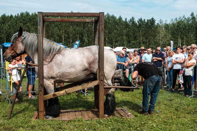 Een hoefsmid onderzoekt de hoeven van een paard.