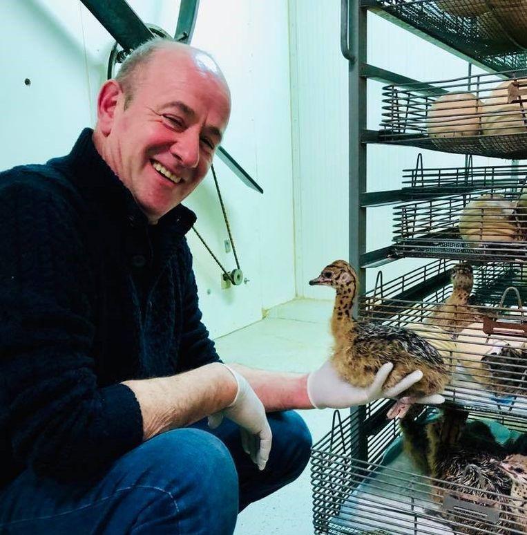 Bert Neirinck van struisvogelboerderij Schobbejaks Hoogte met het eerste struisvogelkuikentje van het jaar.