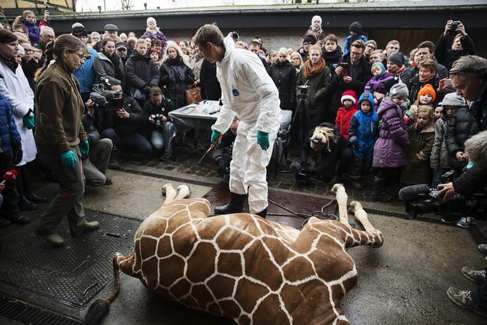 Verzorger met Marius, de giraffe werd in 2014 gedood