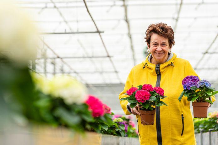 Ellen Verhaar tussen de hortensia's bij Loos Plants