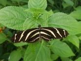 Meeste vlinders in Lingewaard, Buren en Winterswijk