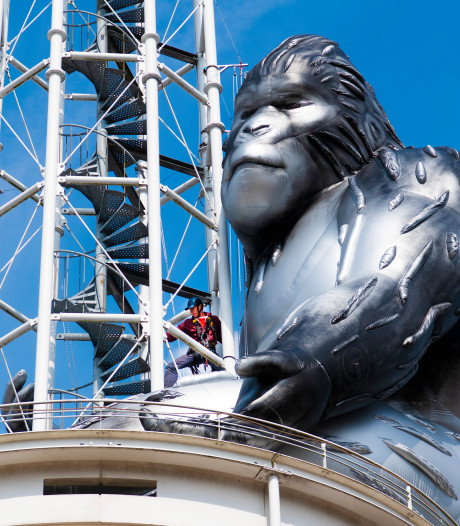 King Kong is even weg, dit is waarom