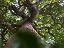 Staatsbosbeheer pakt essentaksterfte aan in recreatiegebieden