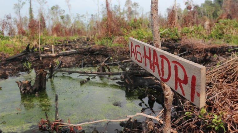 Tientallen naambordjes van landbouwers staan in het zuidwesten van het bos, waar branden hebben gewoed. Beeld Narasi/Save Our Borneo