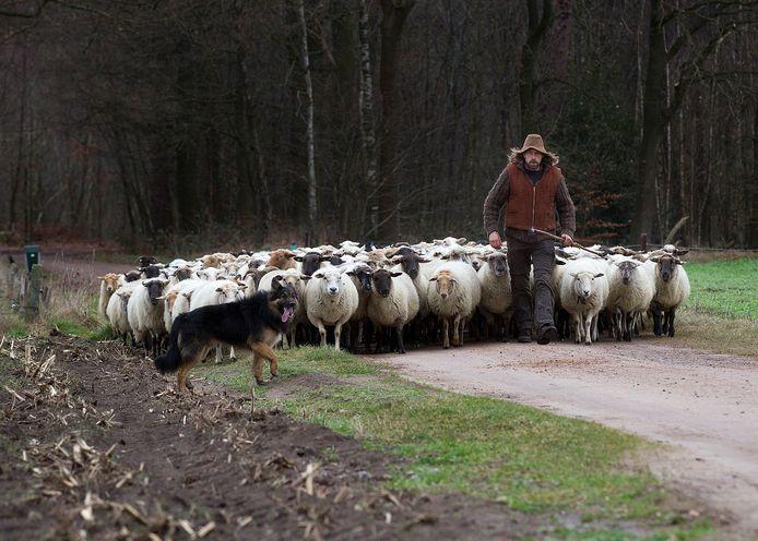 Winterswijk wil schaapskudde van markante herder redden: 'Stel ...