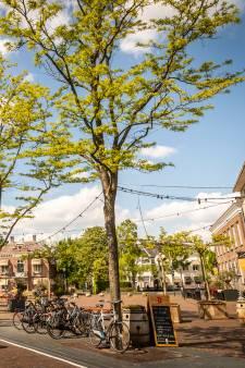 Politiek Geldrop-Mierlo baalt van dure bomenstrop