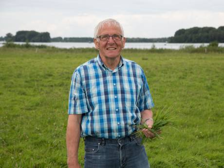 Melkveehouder uit Nunspeet is ganzenoverlast spuugzat: 'Ze vreten de boel kaal en schijten het veld onder'