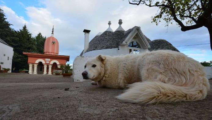 Een hond in Cisternino, in Zuid-Italië.