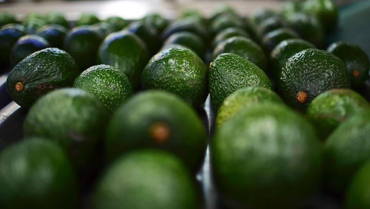 Laat de avocado's maar aanrukken: vanaf februari kun je terecht in het eerste avocadorestaurant van Europa. Beeld anp