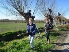 Wilgen knotten op Boomfeestdag in Nieuwerkerk