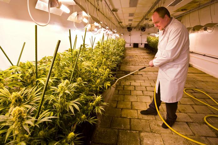 Teelt van hennep voor medicinaal gebruik gebeurt al onder toezicht van de overheid.