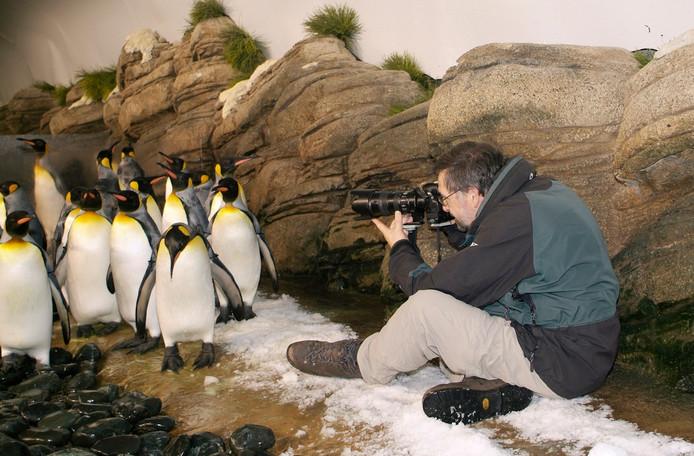 Rob Doolaard fotografeert koningspinguïns in het Oceanium in Diergaarde Blijdorp.