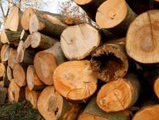 Nieuwe spelregels voor kappen in Boxmeer: boom straks mogelijk plat zonder vergunning