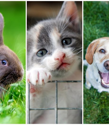 OPROEP   Heb jij een huisdier met één van deze drie namen? Stuur ons een foto!