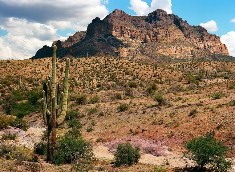 De migranten werden de VS binnengesmokkeld via  Sonorawoestijn in Arizona. Woensdag liep de temperatuur er op tot 42 graden Celsius.
