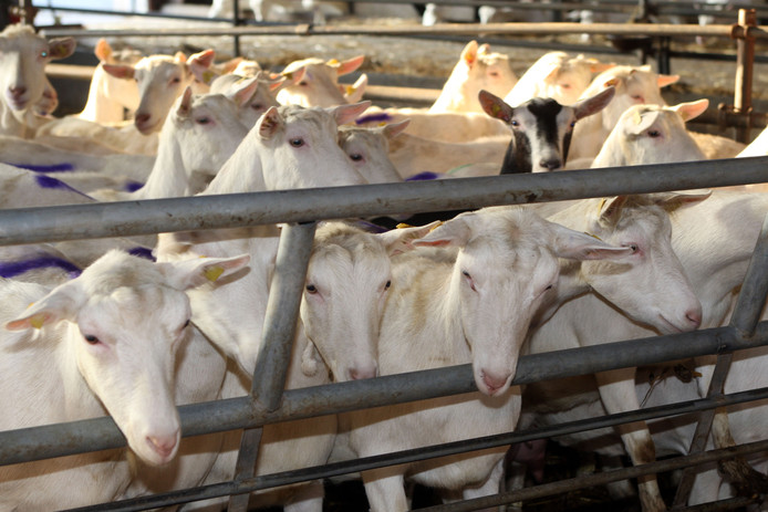 Uit aanvullend onderzoek moet blijken wat het daadwerkelijk verband is tussen luchtwegeneffecten en de veehouderij. Deze onderzoeken zijn nog niet klaar.
