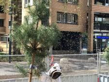 Bijennest met zeker 30.000 bijen verwijderd in Eindhoven