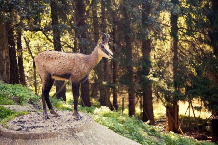 Terwijl je opgaat in het natuurschoon, blijk je ineens naast wolven, herten of beren te wandelen.