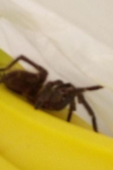 Une mygale surprend les clients au rayon fruits d'un supermarché Auchan