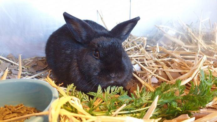 Zwart konijntje Lorens zwaar verwaarloosd, gedumpt aan Suezkade.