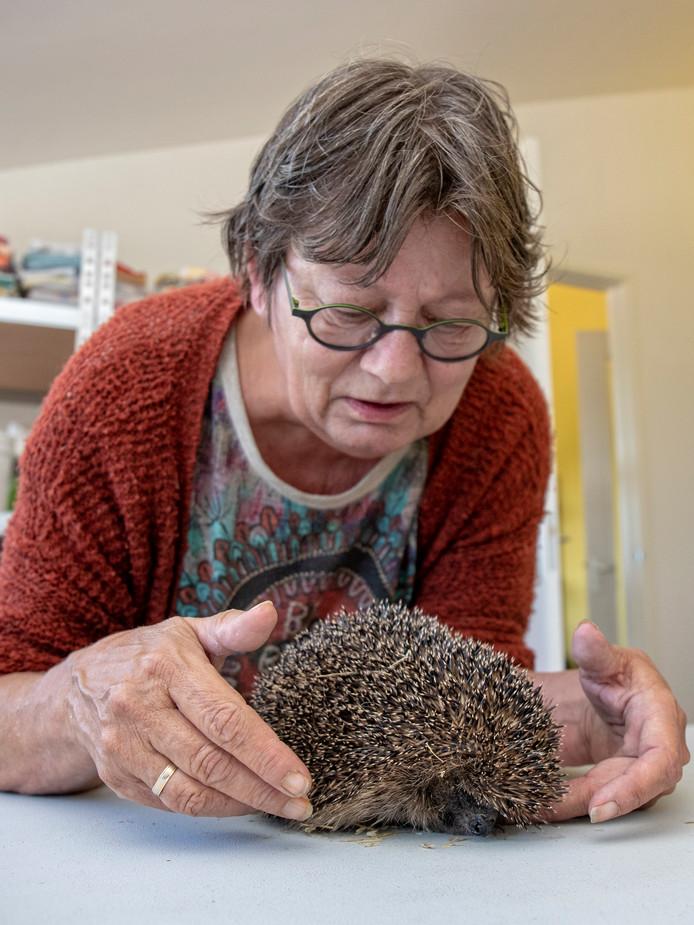 Wilma Klomp van de Egelopvang in Boskoop met een egeltje.