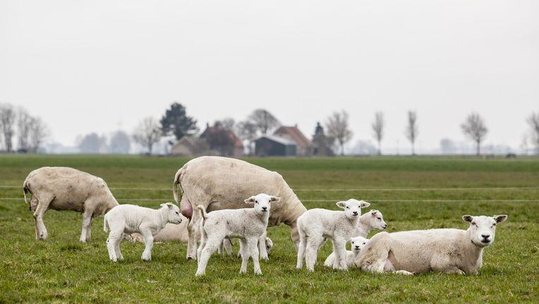 Vraag de gemiddelde Nederlander naar zijn favoriete natuur en hij begint over het agrarische cultuurlandschap. Beeld Harry Cock / de Volkskrant